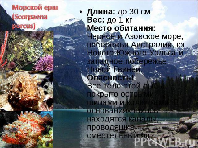 Длина: до 30 см Вес: до 1 кг Место обитания: Черное и Азовское море, побережья Австралии, юг Нового Южного Уэльса и западное побережье Новой Гвинеи. Опасность! Все тело этой рыбы покрыто острыми шипами и колючками. В основаниях шипов находятся канал…
