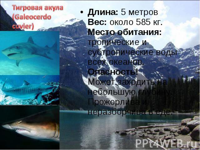 Длина: 5 метров Вес: около 585 кг. Место обитания: тропические и субтропические воды всех океанов. Опасность! Может заходить на небольшую глубину. Прожорлива и неразборчива в еде. Длина: 5 метров Вес: около 585 кг. Место обитания: тропические и субт…