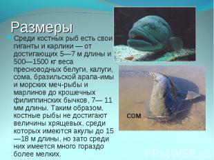 Среди костных рыб есть свои гиганты и карлики — от достигающих 5—7 м длины и 500