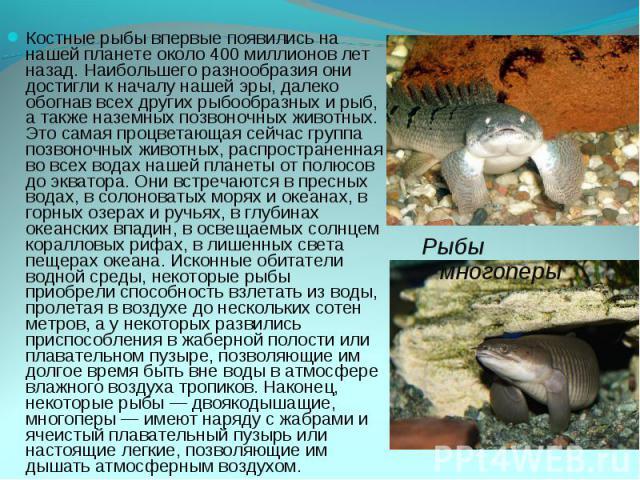 Костные рыбы впервые появились на нашей планете около 400 миллионов лет назад. Наибольшего разнообразия они достигли к началу нашей эры, далеко обогнав всех других рыбообразных и рыб, а также наземных позвоночных животных. Это самая процветающая сей…