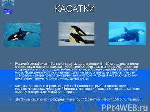 Родичей дельфинов – больших касаток, достигающих 5 – 10 м в длину, а весом 8 тон
