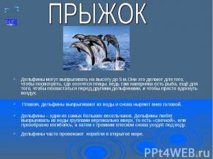 Дельфины могут выпрыгивать на высоту до 5 м.Они это делают для того, чтобы посмо