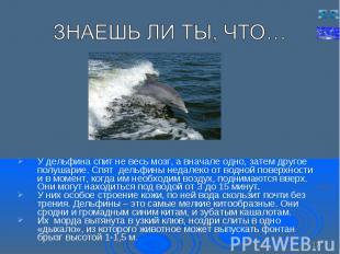 У дельфина спит не весь мозг, а вначале одно, затем другое полушарие. Спят дельф