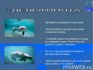 Дельфинята рождаются под водой. Дельфинята рождаются под водой. Они появляются н