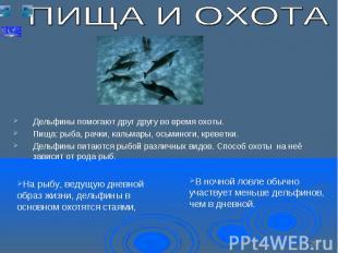 Дельфины помогают друг другу во время охоты. Пища: рыба, рачки, кальмары, осьмин