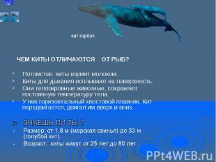 Потомство киты кормят молоком. Потомство киты кормят молоком. Киты для дыхания в