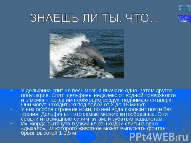 У дельфина спит не весь мозг, а вначале одно, затем другое полушарие. Спят дельфины недалеко от водной поверхности и в момент, когда им необходим воздух, поднимаются вверх. Они могут находиться под водой от 3 до 15 минут. У дельфина спит не весь моз…
