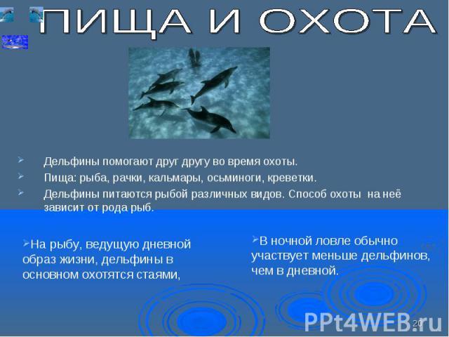 Дельфины помогают друг другу во время охоты. Пища: рыба, рачки, кальмары, осьминоги, креветки. Дельфины питаются рыбой различных видов. Способ охоты на неё зависит от рода рыб.