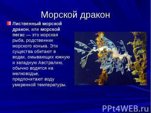 Морской дракон Лиственный морской дракон, или морской пегас— это морская р