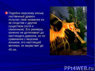 Подобно морскому коньку лиственный дракон получил своё название из-за сходства с