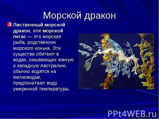 Морской дракон Лиственный морской дракон, или морской пегас— это морская рыба, родственник морского конька. Эти существа обитают в водах, омывающих южную и западную Австралию, обычно водятся на мелководье, предпочитают воду умеренной температуры.
