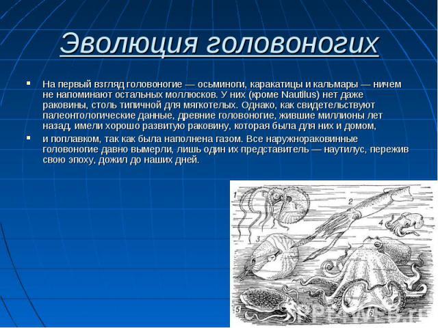На первый взгляд головоногие — осьминоги, каракатицы и кальмары — ничем не напоминают остальных моллюсков. У них (кроме Nautilus) нет даже раковины, столь типичной для мягкотелых. Однако, как свидетельствуют палеонтологические данные, древние голово…