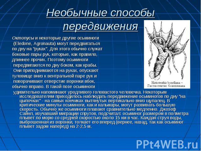 """Октопусы и некоторые другие осьминоги Октопусы и некоторые другие осьминоги (Eledone, Agronauta) могут передвигаться по дну на """"руках"""". Для этого обычно служат боковые пары рук, которые, как правило, длиннее прочих. Поэтому осьминоги перед…"""