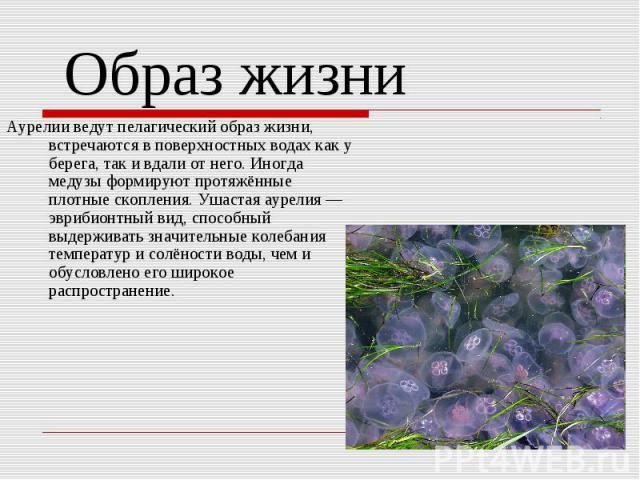 Аурелии ведут пелагический образ жизни, встречаются в поверхностных водах как у берега, так и вдали от него. Иногда медузы формируют протяжённые плотные скопления. Ушастая аурелия — эврибионтный вид, способный выдерживать значительные колебания темп…
