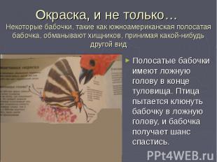 Полосатые бабочки имеют ложную голову в конце туловища. Птица пытается клюнуть б