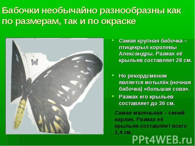 Самая крупная бабочка – птицекрыл королевы Александры. Размах её крыльев составляет 28 см. Самая крупная бабочка – птицекрыл королевы Александры. Размах её крыльев составляет 28 см. Но рекордсменом является мотылёк (ночная бабочка) «большая сова». Р…