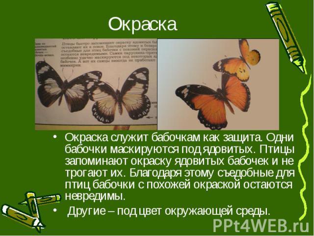 Окраска служит бабочкам как защита. Одни бабочки маскируются под ядовитых. Птицы запоминают окраску ядовитых бабочек и не трогают их. Благодаря этому съедобные для птиц бабочки с похожей окраской остаются невредимы. Окраска служит бабочкам как защит…