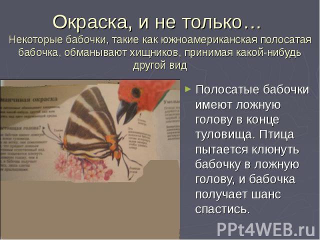 Полосатые бабочки имеют ложную голову в конце туловища. Птица пытается клюнуть бабочку в ложную голову, и бабочка получает шанс спастись. Полосатые бабочки имеют ложную голову в конце туловища. Птица пытается клюнуть бабочку в ложную голову, и бабоч…