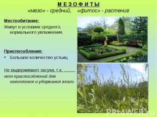 М Е З О Ф И Т Ы «мезо» - средний, «фитос» - растение Местообитание: Живут в усло