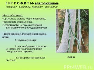 Г И Г Р О Ф И Т Ы- влаголюбивые «гигрос» - влажный, «фитос» - растение Местообит