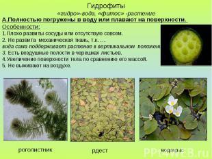 Гидрофиты «гидро»-вода, «фитос» -растение А.Полностью погружены в воду или плава