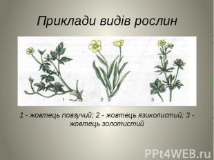 Приклади видів рослин 1 - жовтець повзучий; 2 - жовтець язиколистий; 3 - жовтець