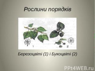 Рослини порядків Березоцвіті (1) і Букоцвіті (2)