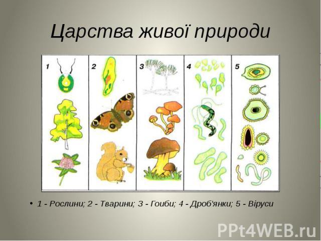 Царства живої природи 1 - Рослини; 2 - Тварини; З - Гоиби; 4 - Дроб'янки; 5 - Віруси
