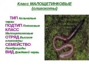 Класс МАЛОЩЕТИНКОВЫЕ (олигохоты) ТИП Кольчатые черви ПОДТИП Поясковые КЛАСС Мало