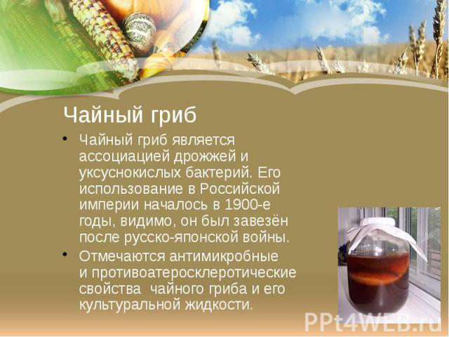 Чайный гриб Чайный гриб является ассоциацией дрожжей и уксуснокислых бактерий. Его использование вРоссийской империиначалось в1900-е годы, видимо, он был завезён послерусско-японской войны. Отмечаются антимикробные ипро…