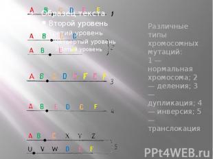 Различные типы хромосомных мутаций: 1 — нормальная хромосома; 2 — деления; 3 — д