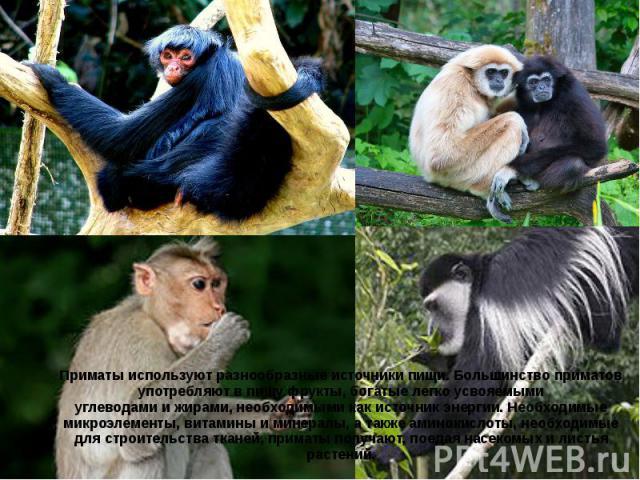 Приматы используют разнообразные источники пищи. Большинство приматов употребляют в пищу фрукты, богатые легко усвояемыми углеводамиижирами, необходимыми как источник энергии. Необходимые микроэлементы, витамины и минералы, а также…