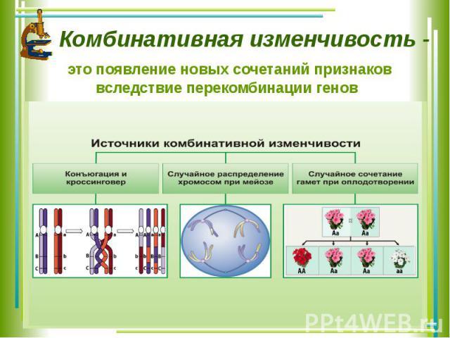 Комбинативная изменчивость - это появление новых сочетаний признаков вследствие перекомбинации генов