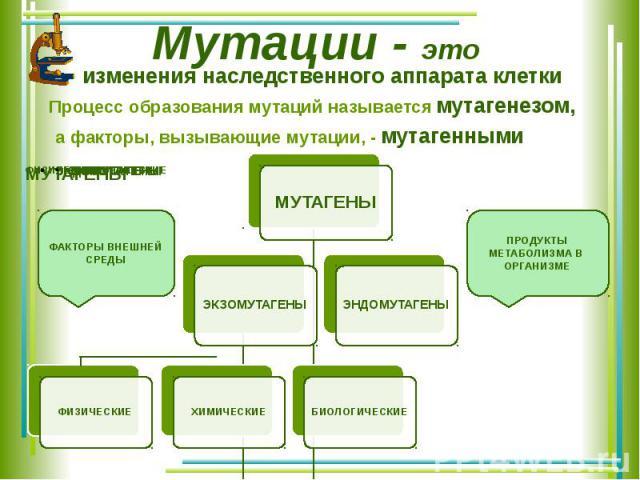 Мутации - это изменения наследственного аппарата клетки Процесс образования мутаций называется мутагенезом, а факторы, вызывающие мутации, - мутагенными