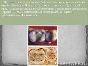 На фото 3 в верхней части – фрагмент человеческой челюсти из китайской пещеры Ло