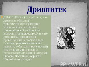 Дриопитек ДРИОПИТЕКИ (Dryopithecus, т. е. древесная обезьяна) — единственный род