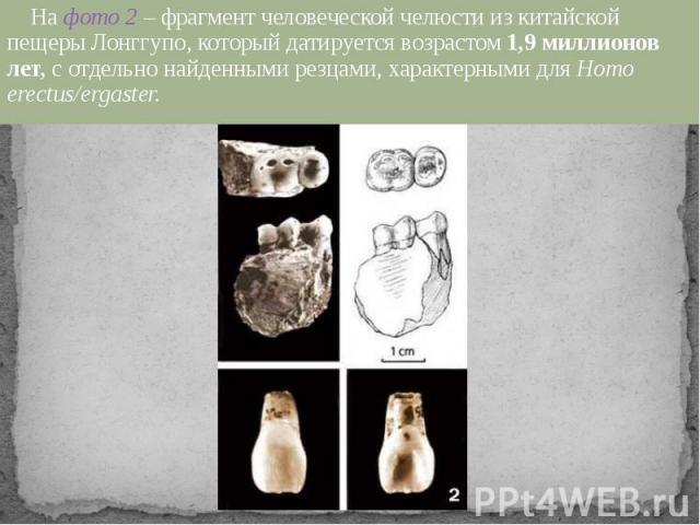 На фото 2 – фрагмент человеческой челюсти из китайской пещеры Лонггупо, который датируется возрастом 1,9 миллионов лет, с отдельно найденными резцами, характерными для Homo erectus/ergaster.