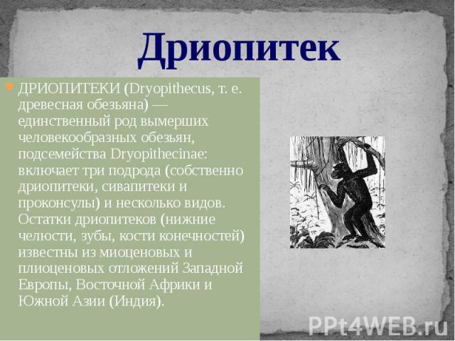 Дриопитек ДРИОПИТЕКИ (Dryopithecus, т. е. древесная обезьяна) — единственный род вымерших человекообразных обезьян, подсемейства Dryopithecinae: включает три подрода (собственно дриопитеки, сивапитеки и проконсулы) и несколько видов. Остатки дриопит…