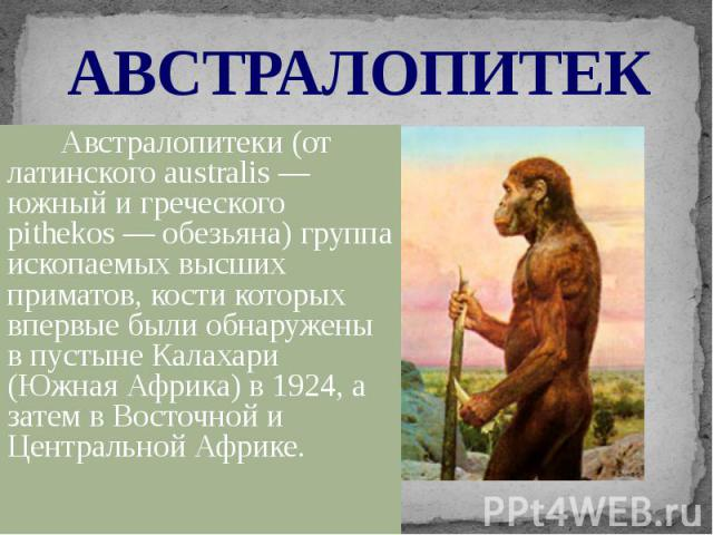 АВСТРАЛОПИТЕК Австралопитеки (от латинского australis— южный и греческого pithеkos— обезьяна) группа ископаемых высших приматов, кости которых впервые были обнаружены в пустыне Калахари (Южная Африка) в 1924, а затем в Восточной и Центра…