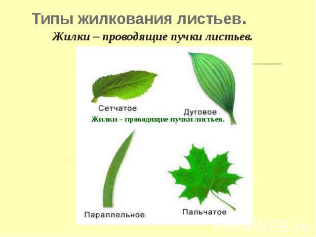 Типы жилкования листьев.