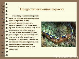 Предостерегающая окраска Такой вид защитной окраски присущ защищенным животным (