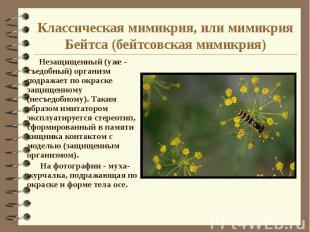 Классическая мимикрия, или мимикрия Бейтса (бейтсовская мимикрия) Незащищенный (