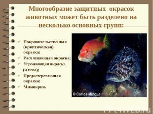 Многообразие защитных окрасок животных может быть разделено на несколько основны
