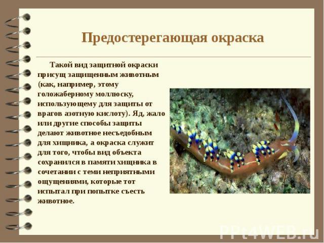 Предостерегающая окраска Такой вид защитной окраски присущ защищенным животным (как, например, этому голожаберному моллюску, использующему для защиты от врагов азотную кислоту). Яд, жало или другие способы защиты делают животное несъедобным для хищн…