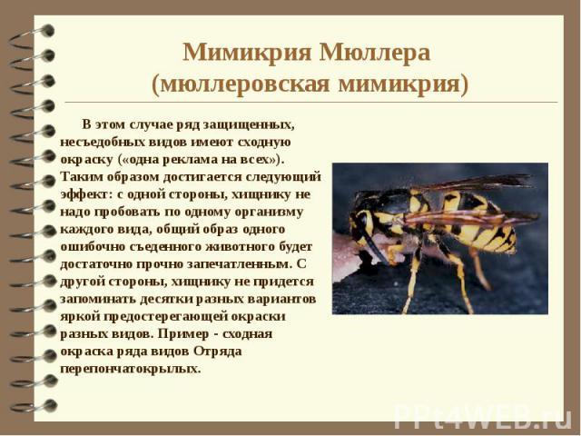 Мимикрия Мюллера (мюллеровская мимикрия) В этом случае ряд защищенных, несъедобных видов имеют сходную окраску («одна реклама на всех»). Таким образом достигается следующий эффект: с одной стороны, хищнику не надо пробовать по одному организму каждо…