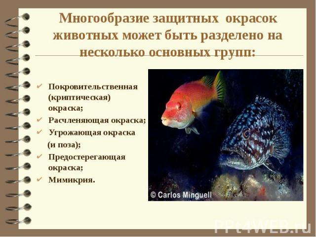 Многообразие защитных окрасок животных может быть разделено на несколько основных групп: Покровительственная (криптическая) окраска; Расчленяющая окраска; Угрожающая окраска (и поза); Предостерегающая окраска; Мимикрия.
