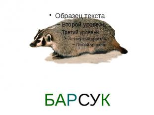 БАРСУК