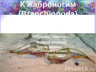 К жаброногим (Branchiopoda) Относятся пресноводные формы (водяные блохи, щитни и