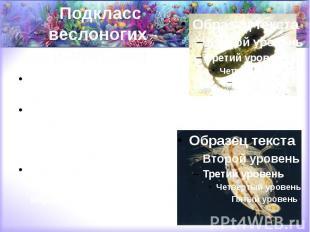 Подкласс веслоногих (Copepoda) морские планктонные (каланиды и др.), пресноводны