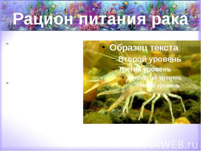 Рацион питания рака это, в основном, пища растительного происхождения. Иногда раки едят всякую живность, которая водится в их водоеме.